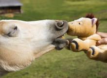 Dina Försäkringar erbjuder hästägare veterinärbesök via videosamtal