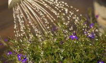 Torr period väntas – tänk på hur du använder dricksvattnet i Båstad kommun