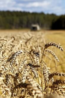 Strategi för en lönsam, växande och hållbar svensk livsmedelskedja