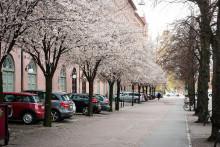 Familjebostäder har fler än 5 000 träd
