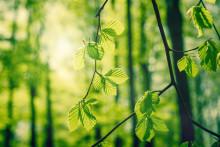 Bokskogens dag firas i Torup 2 september