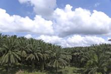 Santa Maria köper certifikat för uthålligt producerad palmolja