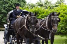 Slottssafari med häst och vagn!