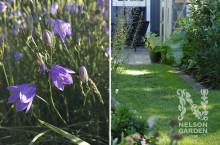 Gör gräsmattan vårfin och låt den blomma för bina