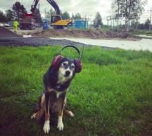 Djursjukhuset Gammelstad tar steget in i framtiden