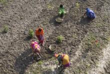 FN:s klimatrapport: Klimatarbetet går hand i hand med fattigdomsbekämpning