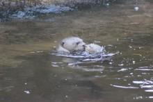Påsk i Parken Zoo firas med äggjakt och utterunge
