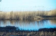 Ny HaV-rapport visar: Gamla bekämpningsmedel kvar i Sveriges grundvatten