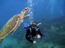 Hur fungerar korallreven?
