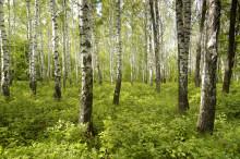God hälsa via utvinning av svenska växter
