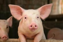 Agrobiotalous aamukahvit: Eläinsuojelulakiuudistus