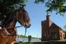 """Mats Denninger: """"Varför vill så många kommuner bli hästkommuner?"""""""