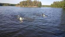 Första swimrun-träningen avklarad!