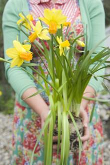 Många möjligheter med blomsterlökar i kruka