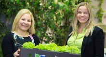 Biohajoava sulateliima parantaa pakkausten ympäristöystävällisyyttä