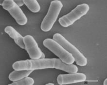 Forskare visar att fyrsträngat DNA bildas och veckas upp