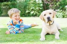 Antallet af skovflåter boomer – Beskyt din hund og kat mod de farlige bid.