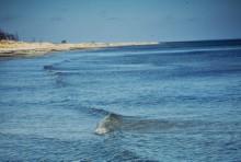 Internationellt avtal nått om marin geoengineering och havsgödning