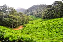 Rundresa i Colombia - kaffe och karaktär