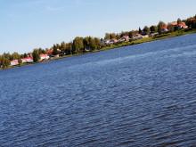 30 ton fisk blir biogas i kampen mot alger