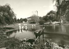 När storken kom till Sundbyberg, nästa utställning på Marabouparken konsthall