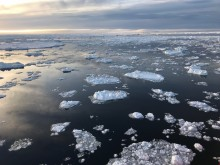 """Inget nytt marint skyddat område i Antarktis: """"Besvikelse över att förslagen stoppades"""""""