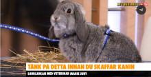 Att tänka på inför ett kanin köp.
