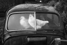 Мартин Пар ще бъде отличен с Наградата за изключителен принос към фотографията на Sony World Photography Awards 2017