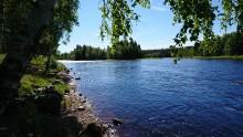 Pressinbjudan: 45 åtgärder som ska förbättra Dalälvens vattenmiljö