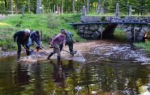 Vattenråden och kommunen satsar stort på artrika bäckar och åar