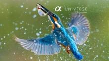 Site-ul Sony α Universe Europe este online