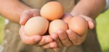Nestlé modtager Good Egg Award for æg fra fritgående høns