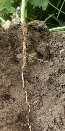 European Soil Scientists Unite To Tackle Threats to Soil