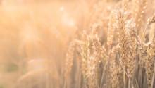 Seminarium 21 november: Jordbrukets klimatanpassning – hur går det till?