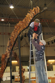 T-rex dinosauriehuvud sätts på plats och dags för invigning!
