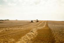 Mondelēz International amplía su programa de trigo sostenible para cubrir el 100% de la producción de sus galletas en Europa en 2022
