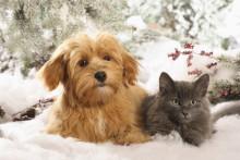 Jul och nyår – olycksdrabbade högtider för husdjuren