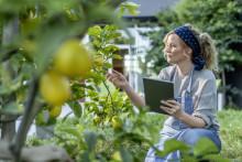 SAP visar hur hållbarhetsarbete bidrar till affärsresultaten och FN:s hållbarhetsmål