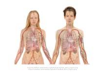 Kan du tänka dig att donera ett organ?