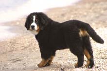 Badfaror för hundar