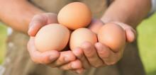 Nestlén tavoite: Tuotteissa ei käytetä häkkikanojen munia vuonna 2025
