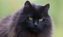 Överviktiga katter – ett allt större hälsoproblem