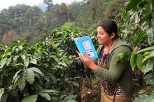 Jämställda kaffeskördar: kvinnliga odlare saknar tillgång till samma resurser som män