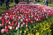 Möt våren i ett blomstrande Holland!