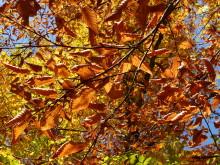 Through the Heart of New England - Graham Stenger