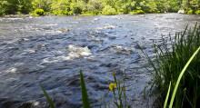 Högstadieelever samarbetar med Kronolaxfisket i Mörrum