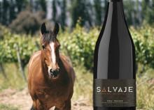 Salvaje – Chilenskt naturvin äntligen i Sverige