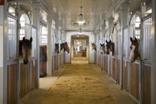 Politiker möter hästnäringen i stallgången
