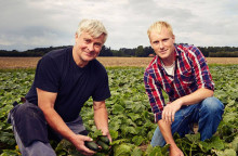 Hettan får svenska gurkor att växa i rekordfart