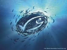 Orkla Foods Sverige satsar på 100% MSC-märkt fisk
